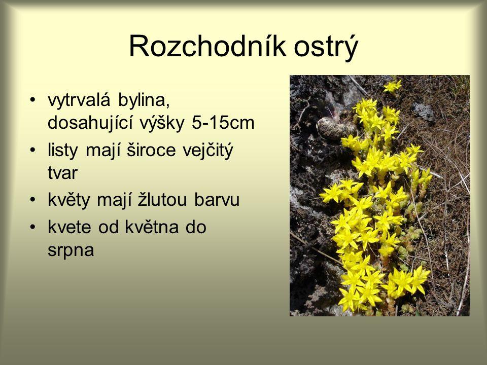 Rozchodník ostrý vytrvalá bylina, dosahující výšky 5-15cm listy mají široce vejčitý tvar květy mají žlutou barvu kvete od května do srpna