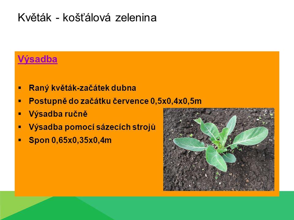 Květák - košťálová zelenina Výsadba  Raný květák-začátek dubna  Postupně do začátku července 0,5x0,4x0,5m  Výsadba ručně  Výsadba pomocí sázecích