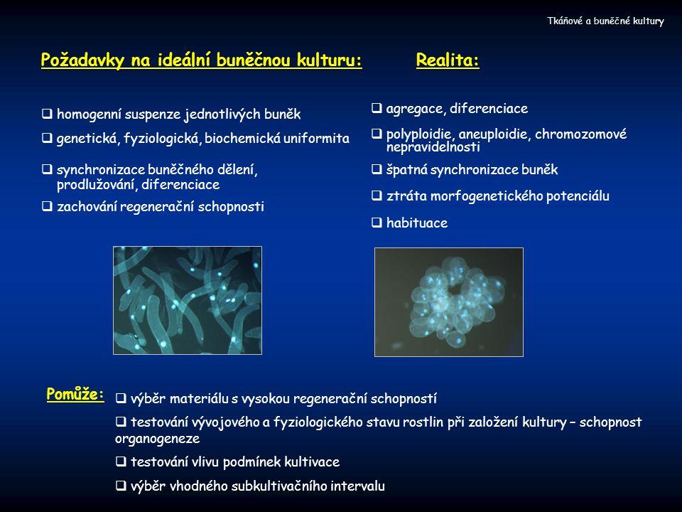 Tkáňové a buněčné kultury Požadavky na ideální buněčnou kulturu:  homogenní suspenze jednotlivých buněk  genetická, fyziologická, biochemická uniformita  synchronizace buněčného dělení, prodlužování, diferenciace  zachování regenerační schopnosti Realita:  agregace, diferenciace  polyploidie, aneuploidie, chromozomové nepravidelnosti  špatná synchronizace buněk  ztráta morfogenetického potenciálu  habituace Pomůže:  výběr materiálu s vysokou regenerační schopností  testování vývojového a fyziologického stavu rostlin při založení kultury – schopnost organogeneze  testování vlivu podmínek kultivace  výběr vhodného subkultivačního intervalu