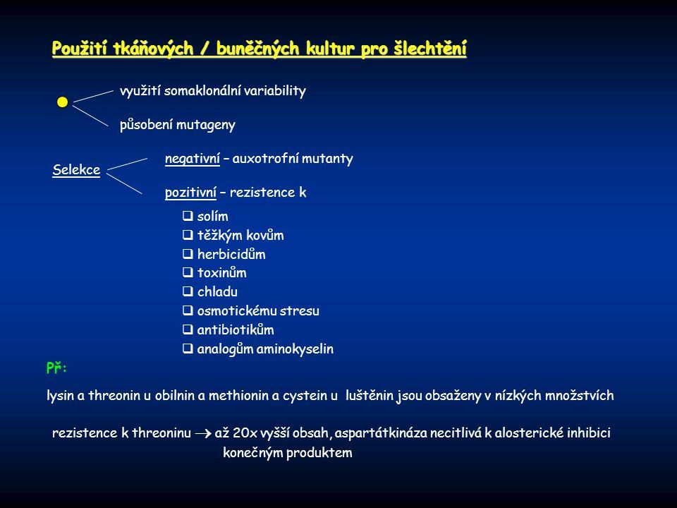 Použití tkáňových / buněčných kultur pro šlechtění využití somaklonální variability působení mutageny Selekce negativní – auxotrofní mutanty pozitivní – rezistence k  solím  těžkým kovům  herbicidům  toxinům  chladu  osmotickému stresu  antibiotikům  analogům aminokyselin rezistence k threoninu  až 20x vyšší obsah, aspartátkináza necitlivá k alosterické inhibici konečným produktem lysin a threonin u obilnin a methionin a cystein u luštěnin jsou obsaženy v nízkých množstvích Př: