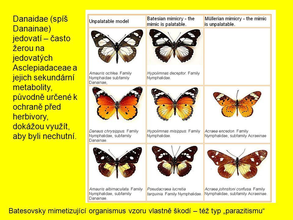 Danaidae (spíš Danainae) jedovatí – často žerou na jedovatých Asclepiadaceae a jejich sekundární metabolity, původně určené k ochraně před herbivory,