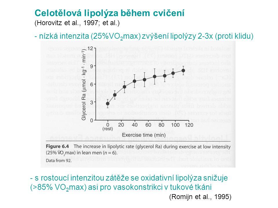 Celotělová lipolýza během cvičení (Horovitz et al., 1997; et al.) - nízká intenzita (25%VO 2 max) zvýšení lipolýzy 2-3x (proti klidu) - s rostoucí intenzitou zátěže se oxidativní lipolýza snižuje (>85% VO 2 max) asi pro vasokonstrikci v tukové tkáni (Romijn et al., 1995)