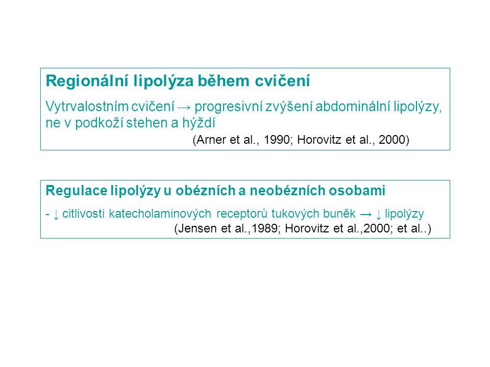 Regionální lipolýza během cvičení Vytrvalostním cvičení → progresivní zvýšení abdominální lipolýzy, ne v podkoží stehen a hýždí (Arner et al., 1990; Horovitz et al., 2000) Regulace lipolýzy u obézních a neobézních osobami - ↓ citlivosti katecholaminových receptorů tukových buněk → ↓ lipolýzy (Jensen et al.,1989; Horovitz et al.,2000; et al..)
