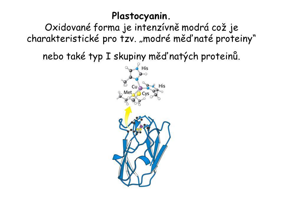 """Plastocyanin. Oxidované forma je intenzívně modrá což je charakteristické pro tzv. """"modré měďnaté proteiny"""" nebo také typ I skupiny měďnatých proteinů"""