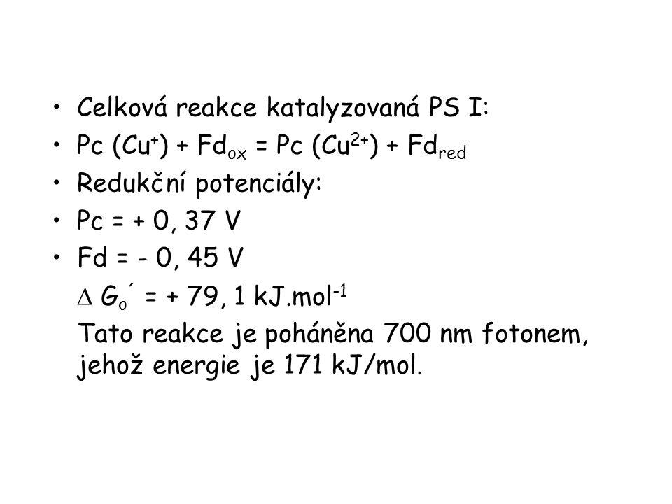 Celková reakce katalyzovaná PS I: Pc (Cu + ) + Fd ox = Pc (Cu 2+ ) + Fd red Redukční potenciály: Pc = + 0, 37 V Fd = - 0, 45 V  G o ´ = + 79, 1 kJ.mol -1 Tato reakce je poháněna 700 nm fotonem, jehož energie je 171 kJ/mol.