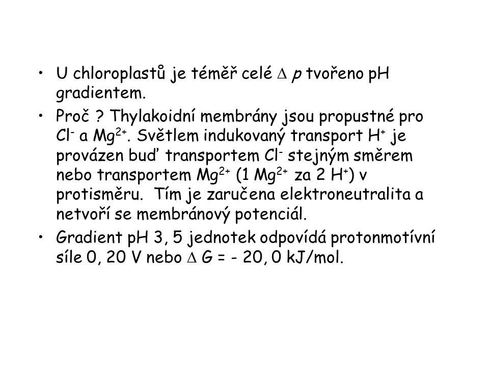 U chloroplastů je téměř celé  p tvořeno pH gradientem. Proč ? Thylakoidní membrány jsou propustné pro Cl - a Mg 2+. Světlem indukovaný transport H +