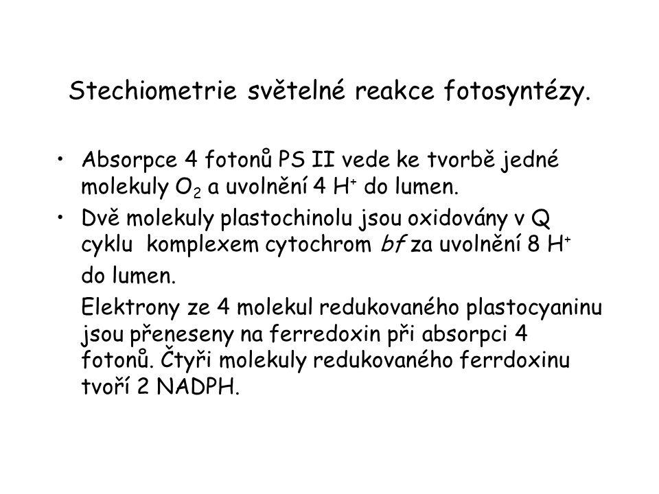 Stechiometrie světelné reakce fotosyntézy. Absorpce 4 fotonů PS II vede ke tvorbě jedné molekuly O 2 a uvolnění 4 H + do lumen. Dvě molekuly plastochi