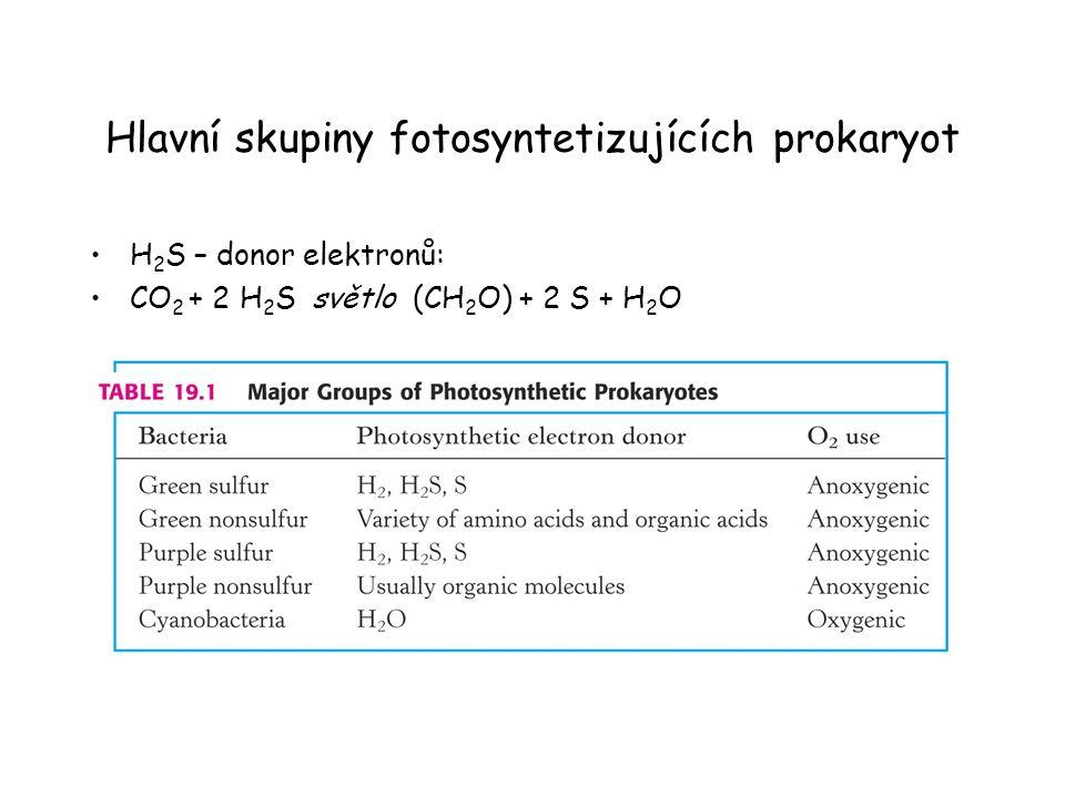 Hlavní skupiny fotosyntetizujících prokaryot H 2 S – donor elektronů: CO 2 + 2 H 2 S světlo (CH 2 O) + 2 S + H 2 O