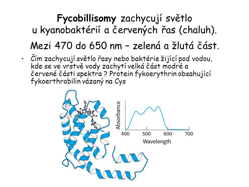 Fycobillisomy zachycují světlo u kyanobaktérií a červených řas (chaluh). Mezi 470 do 650 nm – zelená a žlutá část. Čím zachycují světlo řasy nebo bakt