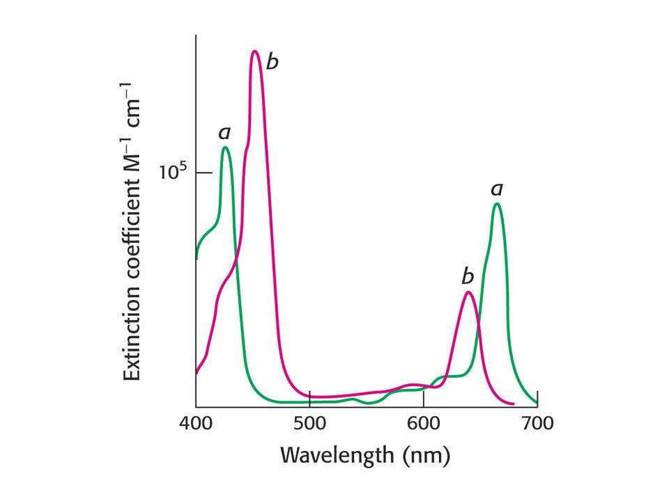 Struktura PS II.D1 a D2 podjednotky jsou červené a modré a vázaný cytochrom žlutý.