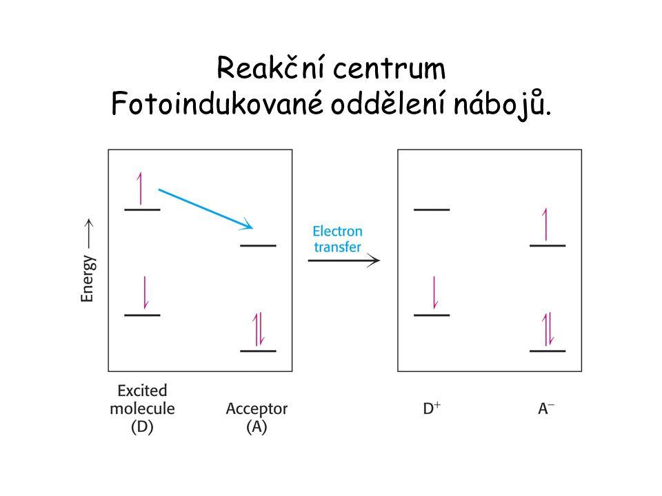 """Cytochrom bf komplex spojuje PS II s PS I.Cytochrom bf komplex katalyzuje celou reakce """"Q cyklem ."""