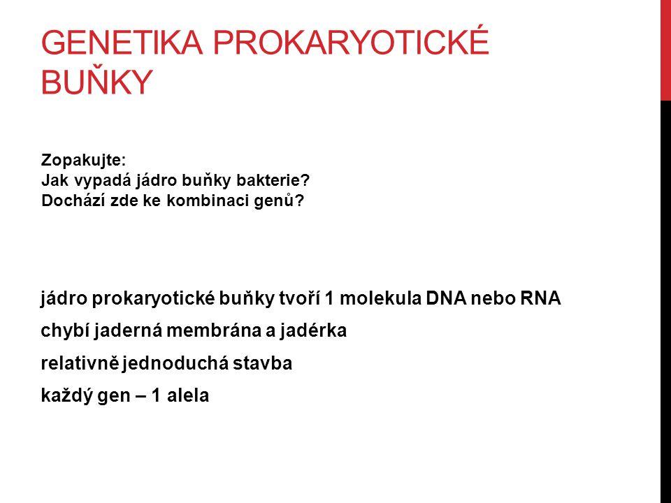 GENETIKA PROKARYOTICKÉ BUŇKY jádro prokaryotické buňky tvoří 1 molekula DNA nebo RNA chybí jaderná membrána a jadérka relativně jednoduchá stavba každý gen – 1 alela Zopakujte: Jak vypadá jádro buňky bakterie.