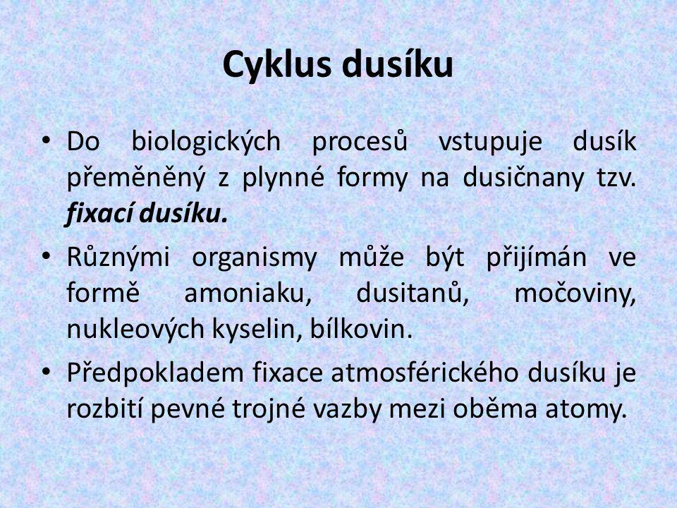 Cyklus dusíku Do biologických procesů vstupuje dusík přeměněný z plynné formy na dusičnany tzv.
