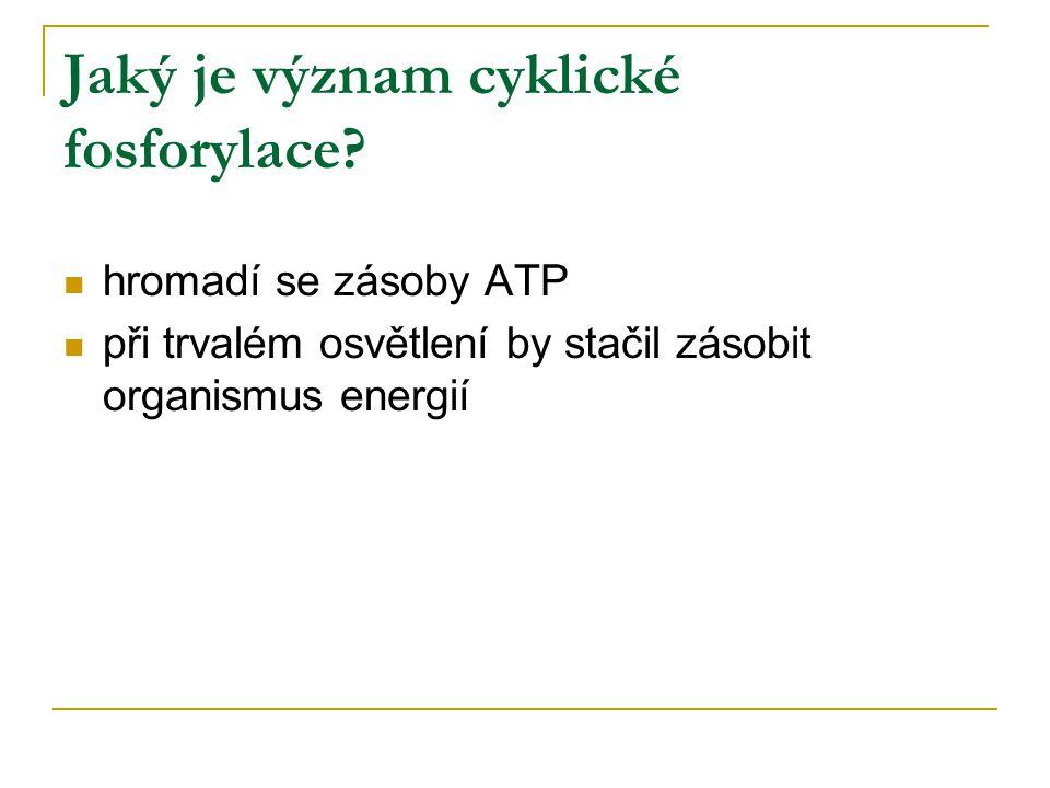 Jaký je význam cyklické fosforylace? hromadí se zásoby ATP při trvalém osvětlení by stačil zásobit organismus energií