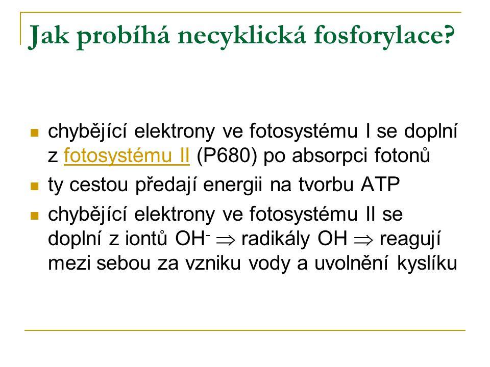 Jak probíhá necyklická fosforylace? chybějící elektrony ve fotosystému I se doplní z fotosystému II (P680) po absorpci fotonů ty cestou předají energi