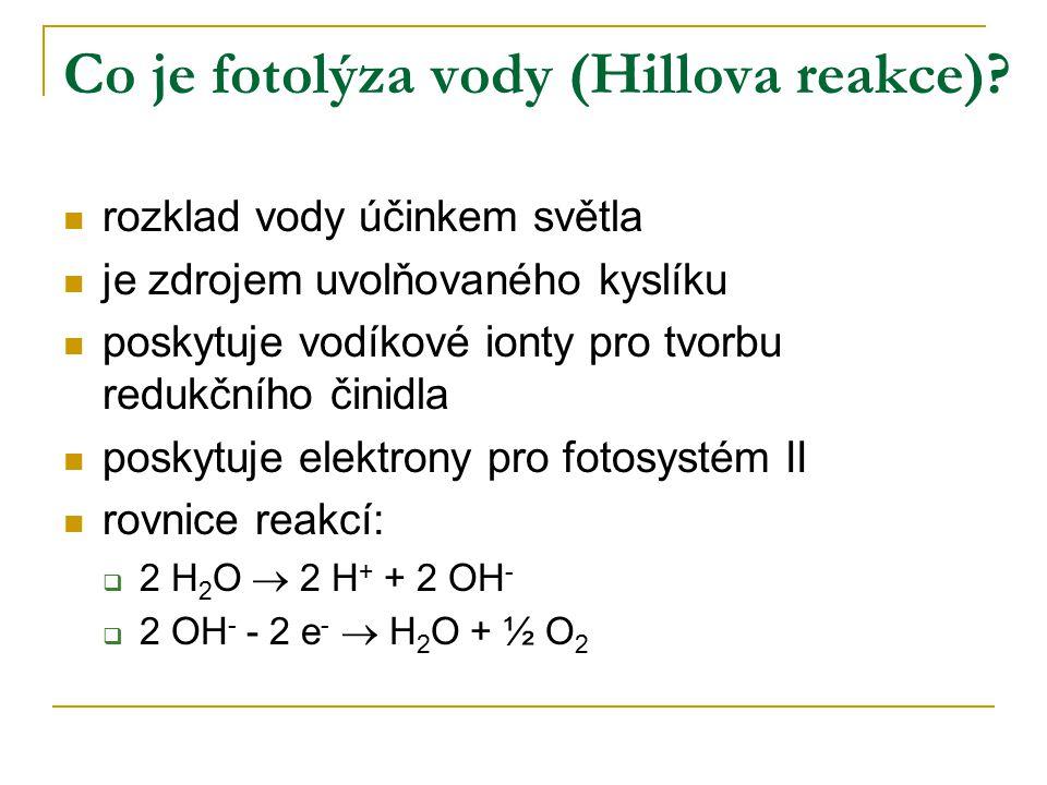 Co je fotolýza vody (Hillova reakce)? rozklad vody účinkem světla je zdrojem uvolňovaného kyslíku poskytuje vodíkové ionty pro tvorbu redukčního činid