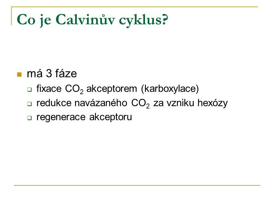 Co je Calvinův cyklus? má 3 fáze  fixace CO 2 akceptorem (karboxylace)  redukce navázaného CO 2 za vzniku hexózy  regenerace akceptoru