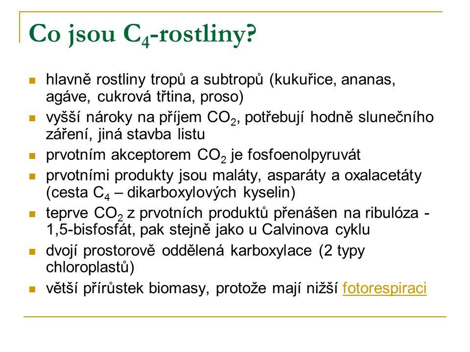Co jsou C 4 -rostliny? hlavně rostliny tropů a subtropů (kukuřice, ananas, agáve, cukrová třtina, proso) vyšší nároky na příjem CO 2, potřebují hodně