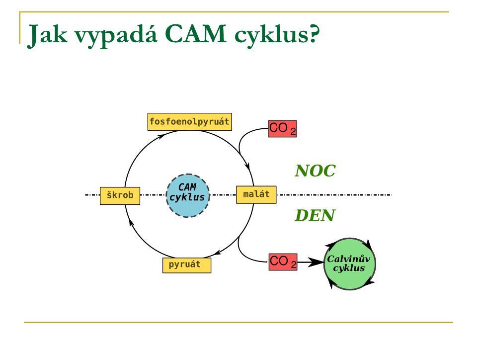 Jak vypadá CAM cyklus?