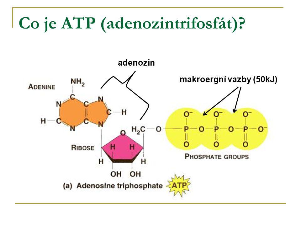 Co je ATP (adenozintrifosfát)? makroergní vazby (50kJ) adenozin