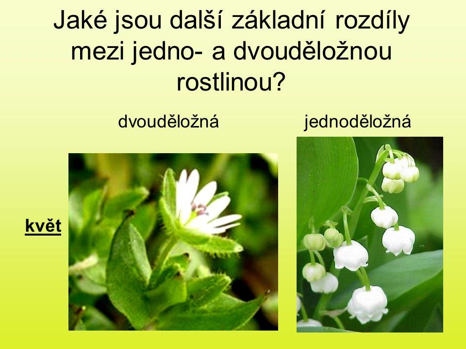 Jaké jsou další základní rozdíly mezi jedno- a dvouděložnou rostlinou? dvouděložnájednoděložná květ