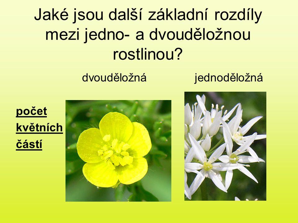 Jaké jsou další základní rozdíly mezi jedno- a dvouděložnou rostlinou? dvouděložnájednoděložná počet květních částí