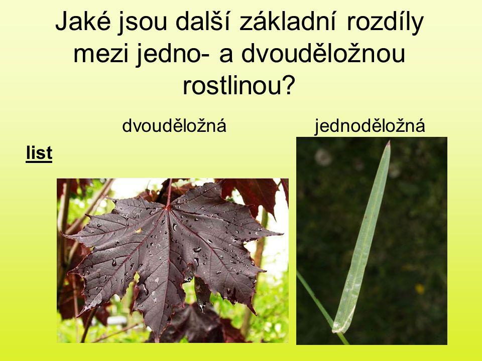 Jaké jsou další základní rozdíly mezi jedno- a dvouděložnou rostlinou? dvouděložnájednoděložná list