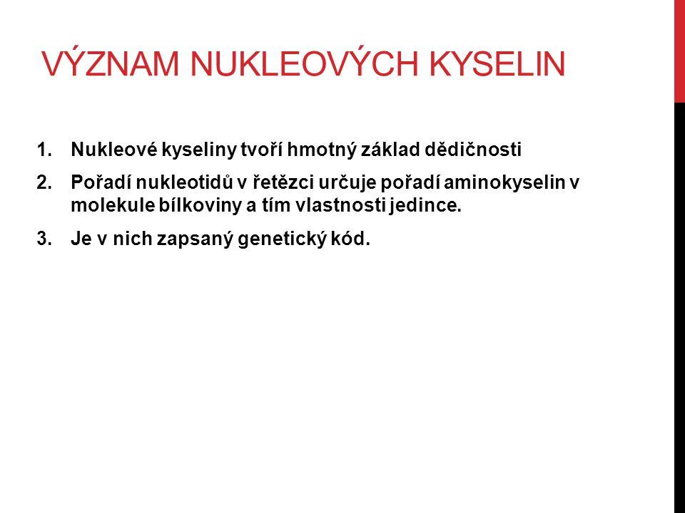 VÝZNAM NUKLEOVÝCH KYSELIN 1.Nukleové kyseliny tvoří hmotný základ dědičnosti 2.Pořadí nukleotidů v řetězci určuje pořadí aminokyselin v molekule bílkoviny a tím vlastnosti jedince.