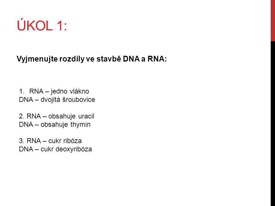 ÚKOL 1: Vyjmenujte rozdíly ve stavbě DNA a RNA: 1.RNA – jedno vlákno DNA – dvojitá šroubovice 2.