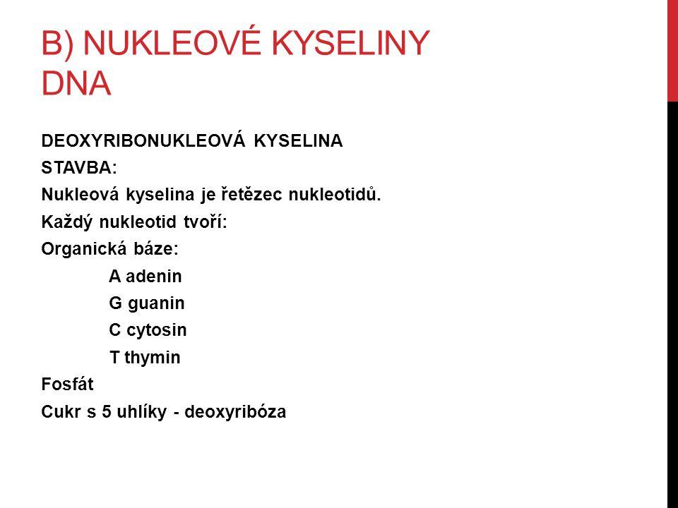 B) NUKLEOVÉ KYSELINY DNA DEOXYRIBONUKLEOVÁ KYSELINA STAVBA: Nukleová kyselina je řetězec nukleotidů.