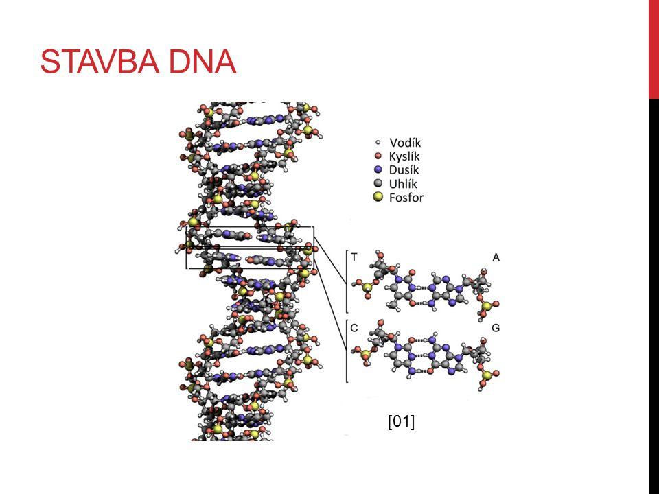 STAVBA DNA [01]