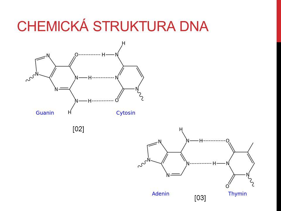 CHEMICKÁ STRUKTURA DNA [02] [03]