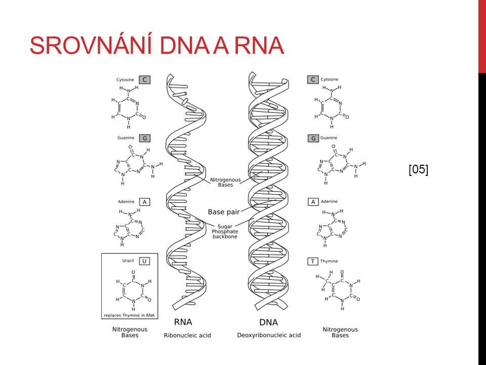 SROVNÁNÍ DNA A RNA [05]