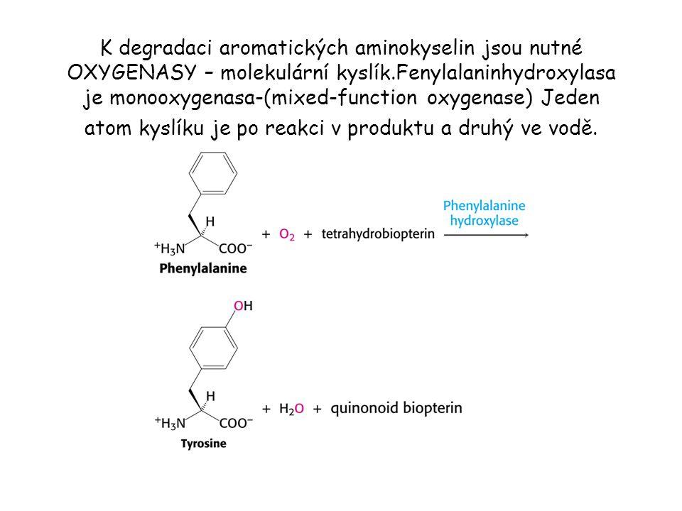 K degradaci aromatických aminokyselin jsou nutné OXYGENASY – molekulární kyslík.Fenylalaninhydroxylasa je monooxygenasa-(mixed-function oxygenase) Jed