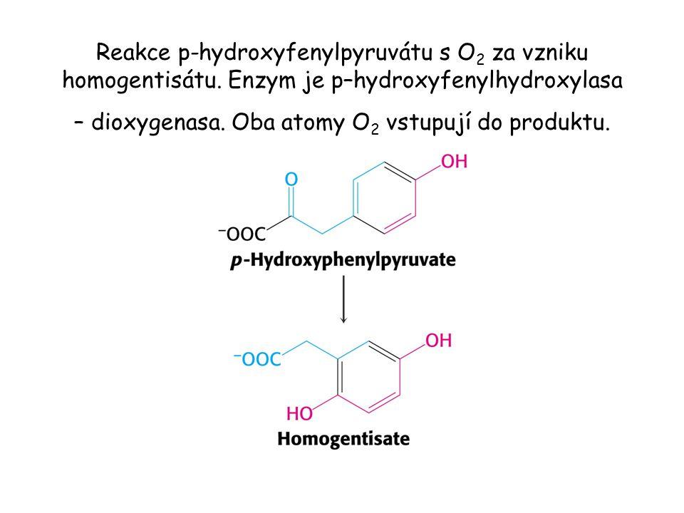 Reakce p-hydroxyfenylpyruvátu s O 2 za vzniku homogentisátu. Enzym je p–hydroxyfenylhydroxylasa – dioxygenasa. Oba atomy O 2 vstupují do produktu.