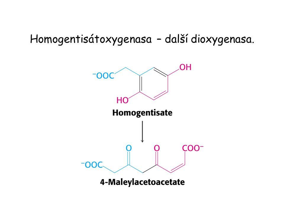 Homogentisátoxygenasa – další dioxygenasa.