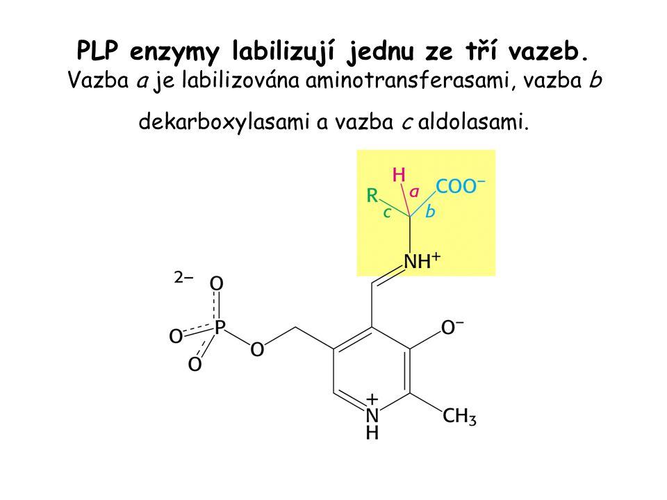 PLP enzymy labilizují jednu ze tří vazeb. Vazba a je labilizována aminotransferasami, vazba b dekarboxylasami a vazba c aldolasami.