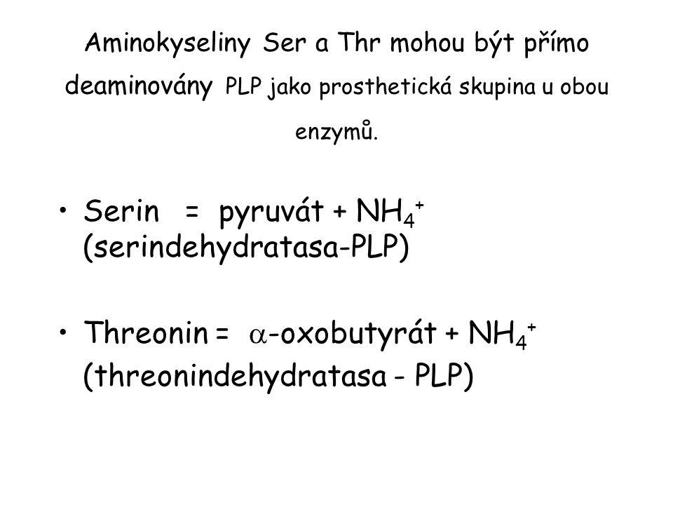 Aminokyseliny Ser a Thr mohou být přímo deaminovány PLP jako prosthetická skupina u obou enzymů. Serin = pyruvát + NH 4 + (serindehydratasa-PLP) Threo