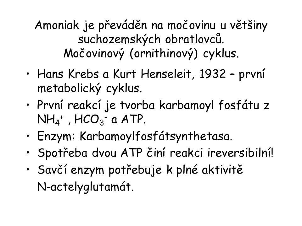 Amoniak je převáděn na močovinu u většiny suchozemských obratlovců. Močovinový (ornithinový) cyklus. Hans Krebs a Kurt Henseleit, 1932 – první metabol