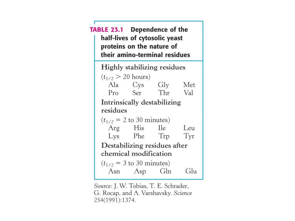 Vykonavatel destrukce proteinů.PROTEASOM – proteinasový komplex nazývaný také 26S proteasom.