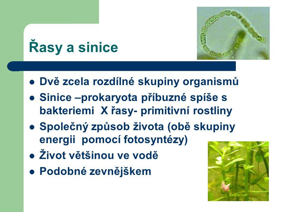Řasy a sinice Dvě zcela rozdílné skupiny organismů Sinice –prokaryota příbuzné spíše s bakteriemi X řasy- primitivní rostliny Společný způsob života (obě skupiny energii pomocí fotosyntézy) Život většinou ve vodě Podobné zevnějškem