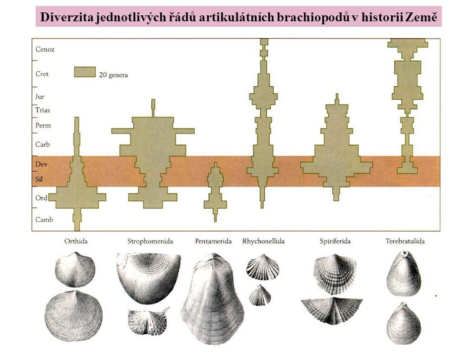 Brachiopods Diverzita jednotlivých řádů artikulátních brachiopodů v historii Země
