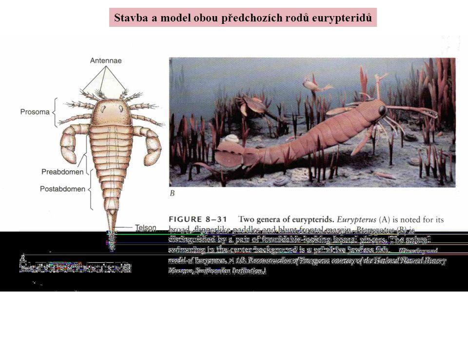 Stavba a model obou předchozích rodů eurypteridů