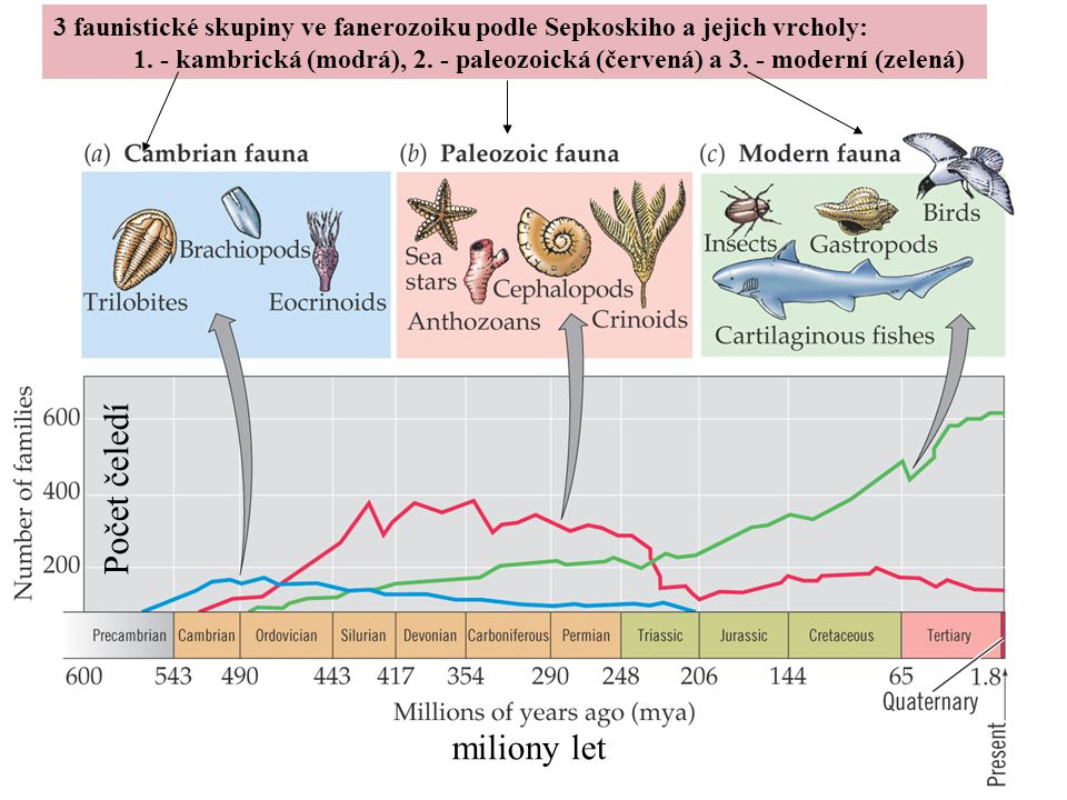 3 faunistické skupiny ve fanerozoiku podle Sepkoskiho a jejich vrcholy: 1. - kambrická (modrá), 2. - paleozoická (červená) a 3. - moderní (zelená) Poč