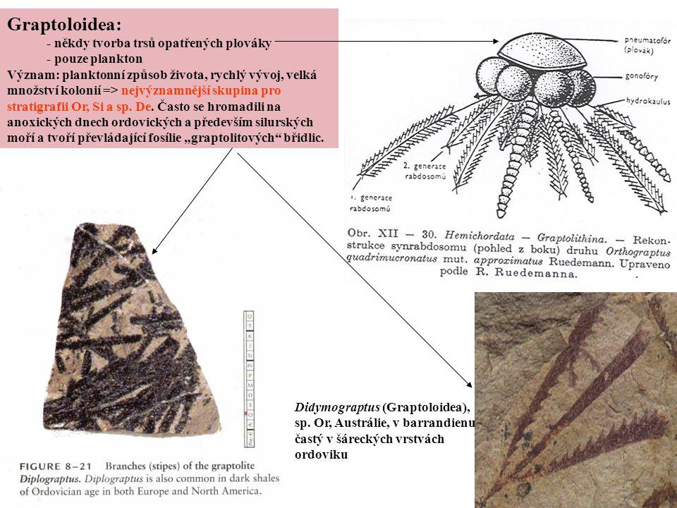 Graptoloidea: - někdy tvorba trsů opatřených plováky - pouze plankton Význam: planktonní způsob života, rychlý vývoj, velká množství kolonií => nejvýz