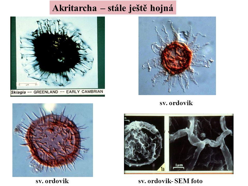 Akritarcha – stále ještě hojná sv. ordovik sv. ordovik- SEM foto