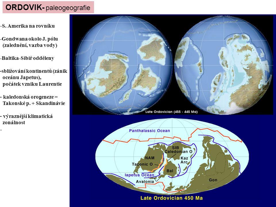 ORDOVIK- paleogeografie - S. Amerika na rovníku -Gondwana okolo J. pólu (zalednění, vazba vody) -Baltika-Sibiř odděleny -sbližování kontinentů (zánik