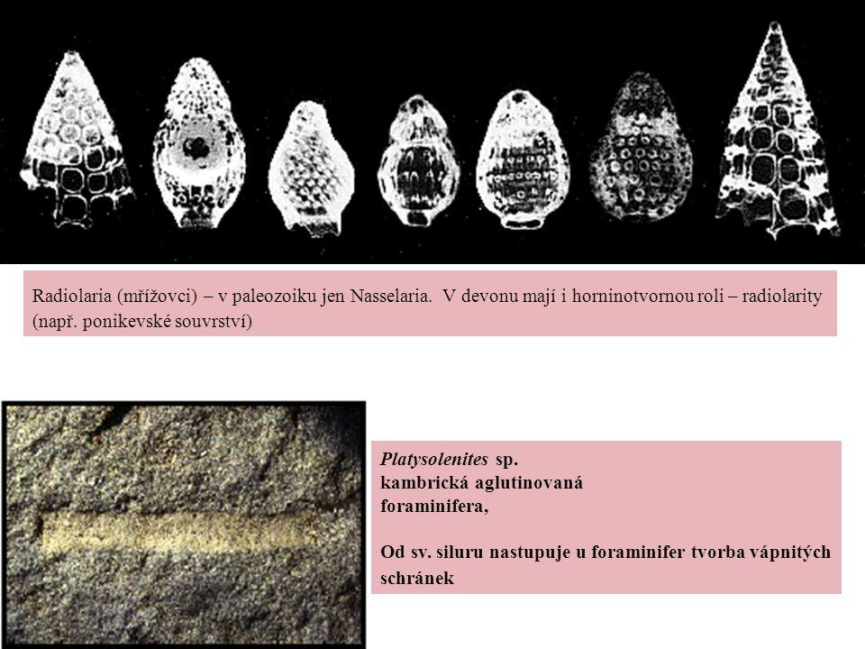 Radiolaria (mřížovci) – v paleozoiku jen Nasselaria. V devonu mají i horninotvornou roli – radiolarity (např. ponikevské souvrství) Platysolenites sp.