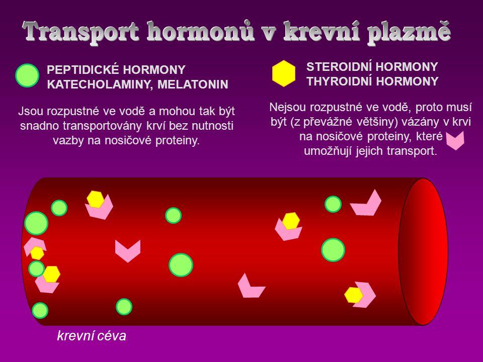 STEROIDNÍ HORMONY THYROIDNÍ HORMONY PEPTIDICKÉ HORMONY KATECHOLAMINY, MELATONIN Jsou rozpustné ve vodě a mohou tak být snadno transportovány krví bez