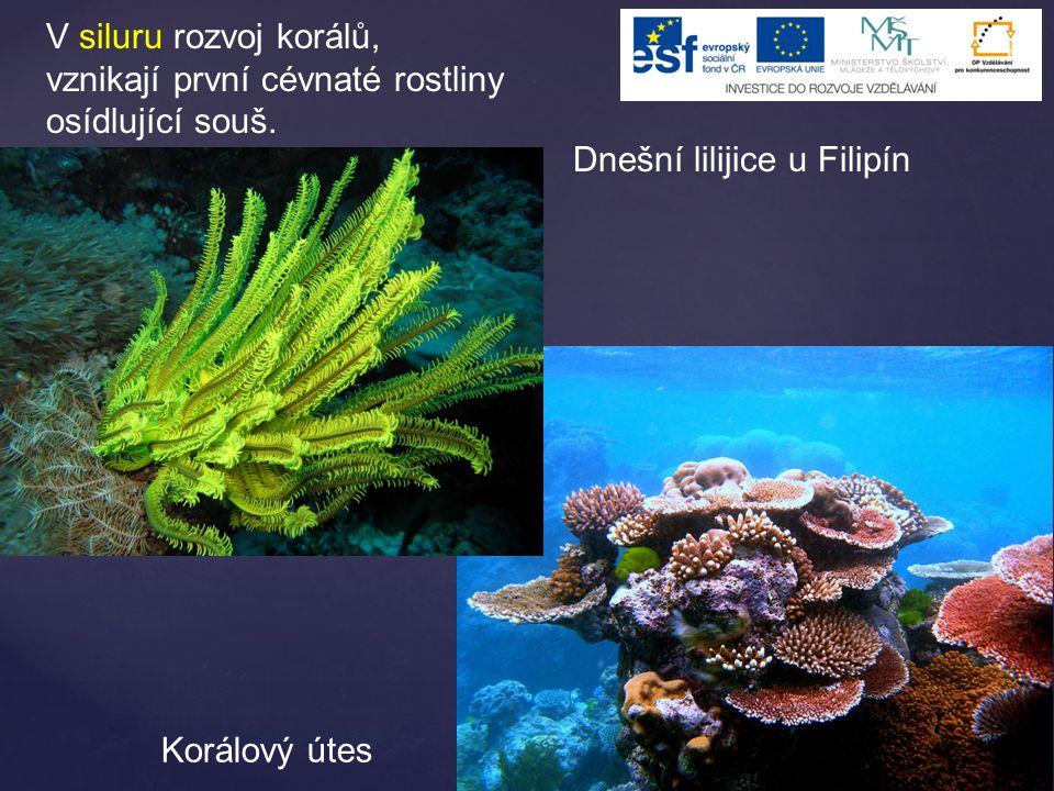 V siluru rozvoj korálů, vznikají první cévnaté rostliny osídlující souš. Dnešní lilijice u Filipín Korálový útes